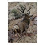 Giant mule deer buck greeting card