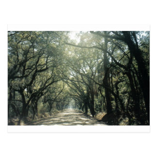 Giant Oak Trees Postcard