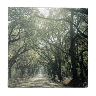 Giant Oak Trees Ceramic Tile