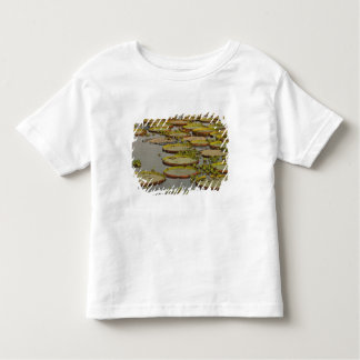 Giant or Victoria Lilies Victoria amazonica, Shirts