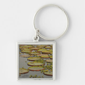 Giant or Victoria Lilies Victoria amazonica, Silver-Colored Square Key Ring