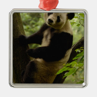 Giant panda Ailuropoda melanoleuca) Family: 3 Christmas Ornament