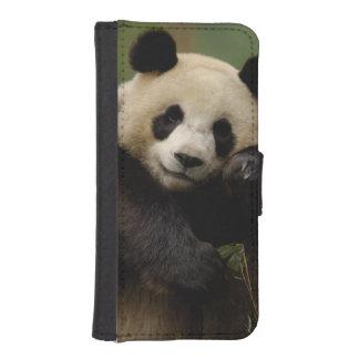 Giant panda Ailuropoda melanoleuca) Family: 4