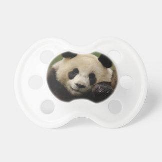 Giant panda Ailuropoda melanoleuca) Family: 4 Baby Pacifiers