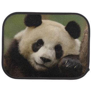 Giant panda Ailuropoda melanoleuca) Family: 4 Car Mat