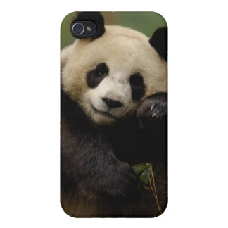 Giant panda Ailuropoda melanoleuca) Family: 4 iPhone 4/4S Cover