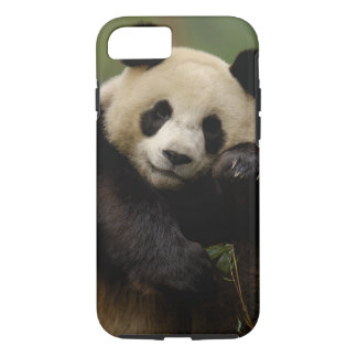 Giant panda Ailuropoda melanoleuca) Family: 4 iPhone 8/7 Case