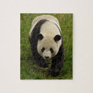 Giant panda (Ailuropoda melanoleuca) Family: 4 Jigsaw Puzzle