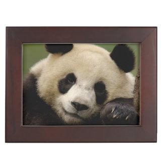 Giant panda Ailuropoda melanoleuca) Family: 4 Keepsake Box