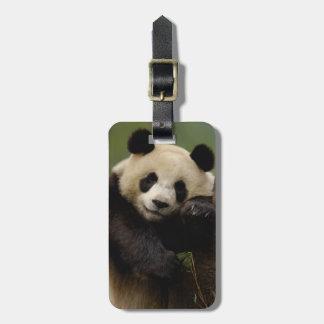 Giant panda Ailuropoda melanoleuca) Family: 4 Luggage Tag