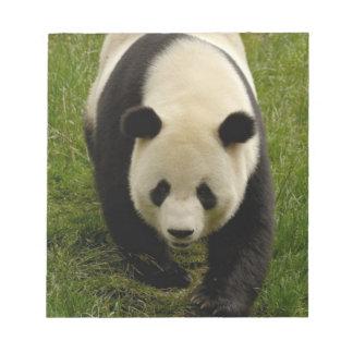 Giant panda (Ailuropoda melanoleuca) Family: 4 Notepad