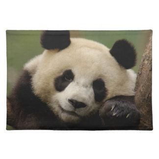 Giant panda Ailuropoda melanoleuca) Family: 4 Placemat