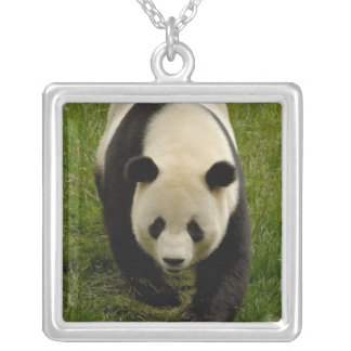 Giant panda (Ailuropoda melanoleuca) Family: 4 Silver Plated Necklace