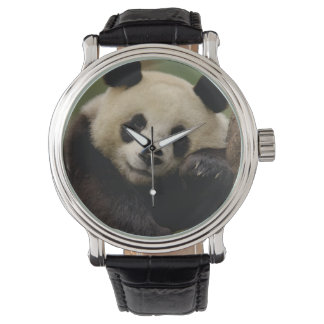 Giant panda Ailuropoda melanoleuca) Family: 4 Watch
