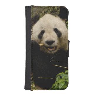 Giant panda Ailuropoda melanoleuca) Family: 5