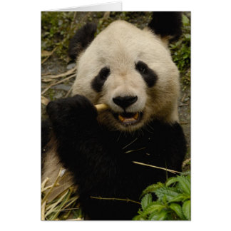 Giant panda Ailuropoda melanoleuca) Family: 5 Card