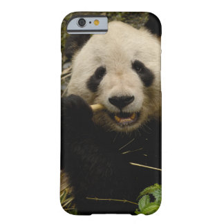 Giant panda Ailuropoda melanoleuca) Family: 5 Barely There iPhone 6 Case