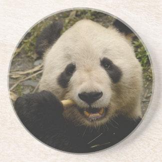 Giant panda Ailuropoda melanoleuca) Family: 5 Coaster
