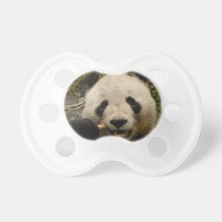 Giant panda Ailuropoda melanoleuca) Family: 5 Dummy