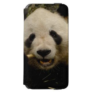 Giant panda Ailuropoda melanoleuca) Family: 5 Incipio Watson™ iPhone 6 Wallet Case