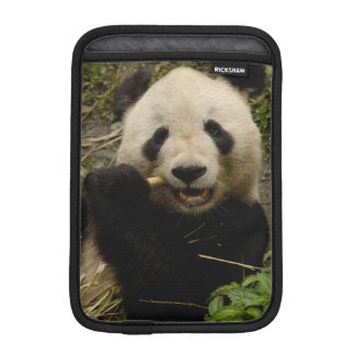 Giant panda Ailuropoda melanoleuca) Family: 5 iPad Mini Sleeve