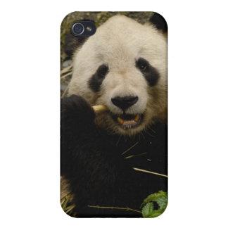 Giant panda Ailuropoda melanoleuca) Family: 5 iPhone 4 Cover