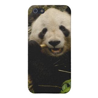 Giant panda Ailuropoda melanoleuca) Family: 5 iPhone 5 Cases