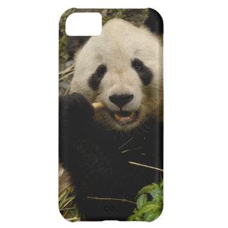 Giant panda Ailuropoda melanoleuca) Family: 5 iPhone 5C Case
