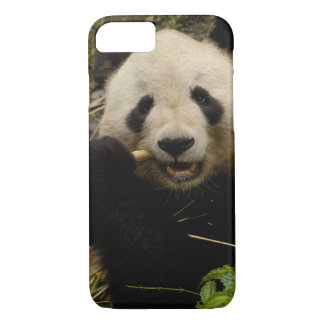 Giant panda Ailuropoda melanoleuca) Family: 5 iPhone 7 Case