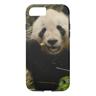 Giant panda Ailuropoda melanoleuca) Family: 5 iPhone 8/7 Case