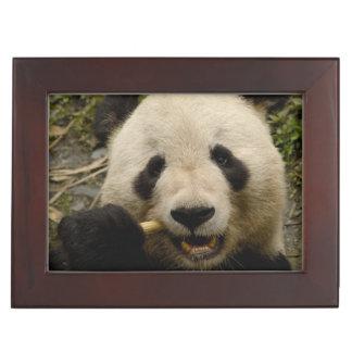 Giant panda Ailuropoda melanoleuca) Family: 5 Keepsake Boxes