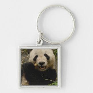 Giant panda Ailuropoda melanoleuca) Family: 5 Key Chains