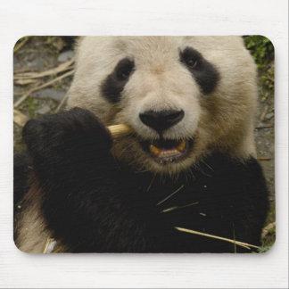Giant panda Ailuropoda melanoleuca) Family: 5 Mouse Mat