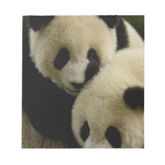Giant panda (Ailuropoda melanoleuca) Family: 5 Notepad