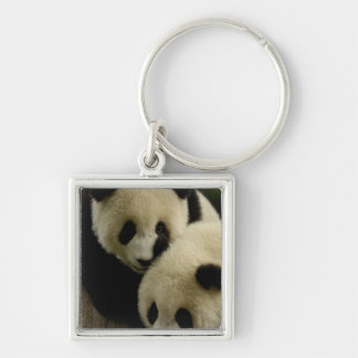 Giant panda (Ailuropoda melanoleuca) Family: 5 Silver-Colored Square Key Ring