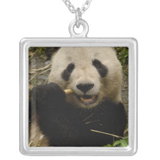 Giant panda Ailuropoda melanoleuca) Family: 5 Silver Plated Necklace