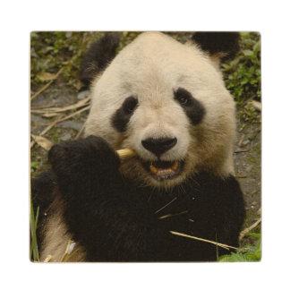 Giant panda Ailuropoda melanoleuca) Family: 5 Wood Coaster