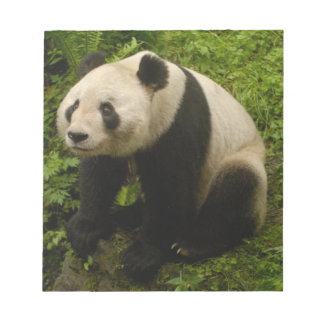 Giant panda (Ailuropoda melanoleuca) Family: 6 Notepad