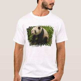 Giant panda (Ailuropoda melanoleuca) Family: 6 T-Shirt