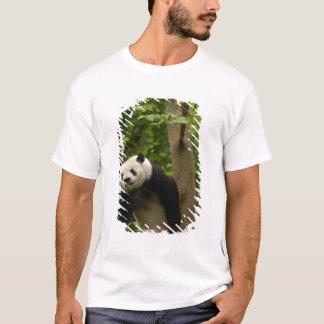 Giant panda Ailuropoda melanoleuca) Family: 6 T-Shirt