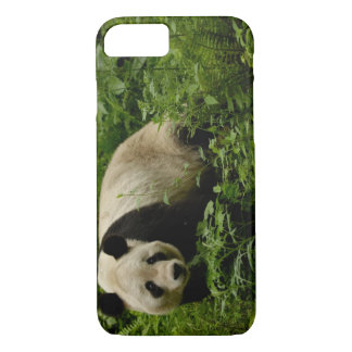 Giant panda (Ailuropoda melanoleuca) Family: 7 iPhone 8/7 Case