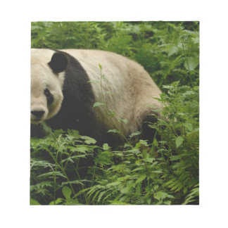 Giant panda (Ailuropoda melanoleuca) Family: 7 Notepad