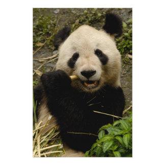 Giant panda Ailuropoda melanoleuca) Family: 7 Photo Print