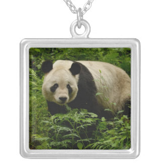 Giant panda (Ailuropoda melanoleuca) Family: 7 Silver Plated Necklace