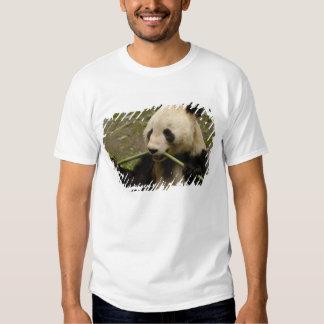 Giant panda Ailuropoda melanoleuca) Family: 7 T Shirts
