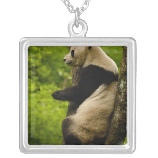 Giant panda Ailuropoda melanoleuca) Family: Silver Plated Necklace