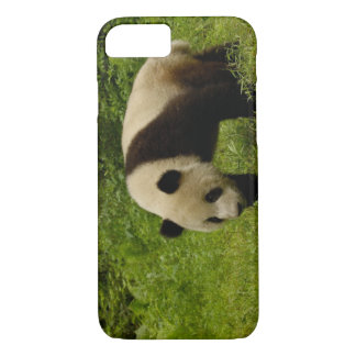 Giant panda (Ailuropoda melanoleuca) in its iPhone 8/7 Case