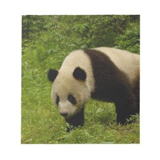 Giant panda (Ailuropoda melanoleuca) in its Notepad