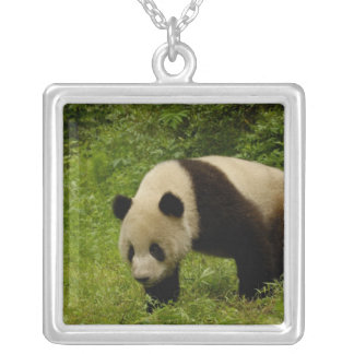 Giant panda (Ailuropoda melanoleuca) in its Silver Plated Necklace