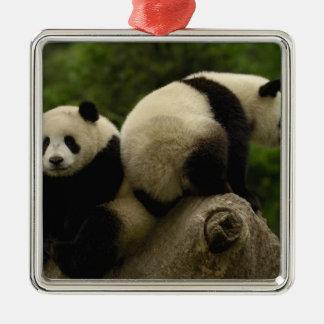 Giant panda babies Ailuropoda melanoleuca) 10 Christmas Ornament